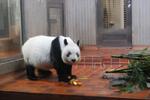 Zoo_0011